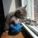 Chat Méchant