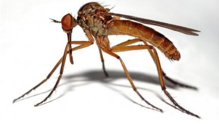 moustiques_UNE