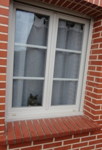 kitty à la fenêtre