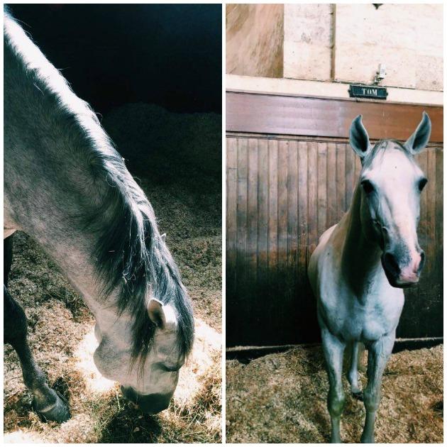 chevaux2